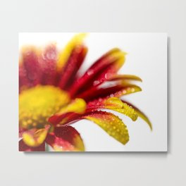 Water Droplets On Mum Petals Nature | Botanical | Floral Photograph Metal Print