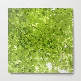 Leaves - JUSTART (c) Metal Print