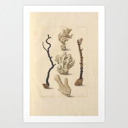 Naturalist Coral Art Print