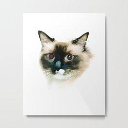 Ragdoll Cat Metal Print