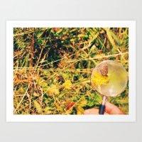 Butterfly through magnifying glass Art Print