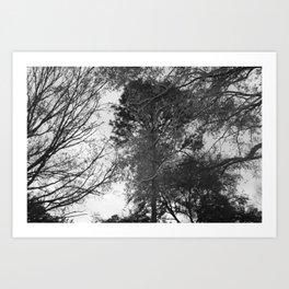 Depth of Nature Art Print