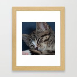 Sleeping Kitty Framed Art Print