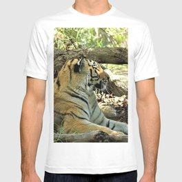 Asian Bengal Tiger Wildcat Resting Forest T-shirt