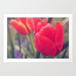 Tulip 4 Art Print