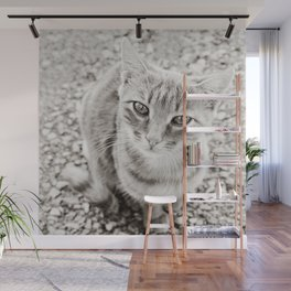 I want goodies! Wall Mural