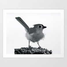 Tufted Titmouse  Mono Art Print