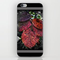 Speckled Leafs iPhone & iPod Skin