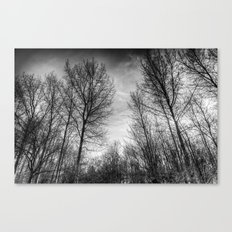 Walking Through Monochrome Trees Canvas Print
