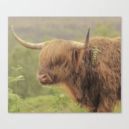 'Hamish' The Highland Cow Canvas Print