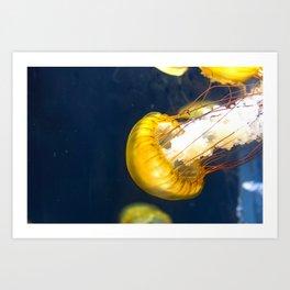 Jellyfish Sea Nettle Artwork Photography Art Print