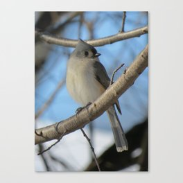 The Tufted Titmouse Canvas Print