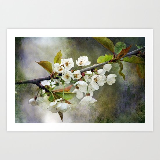 Textured Blossom Art Print