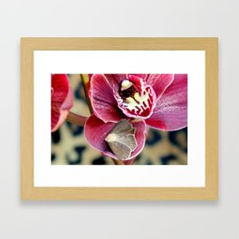 Oddly, Not A Moth Orchid Framed Art Print