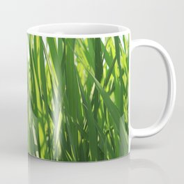 Large reeds leaves in a cane grove Coffee Mug