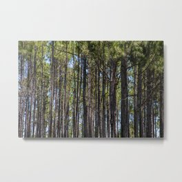 Florida Forest Metal Print