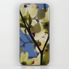 Dogwood Days of Spring iPhone & iPod Skin