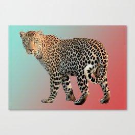 Insane Tiger Canvas Print