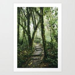 Tropical Forest Art Print