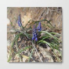 Happy Hyacinth Metal Print