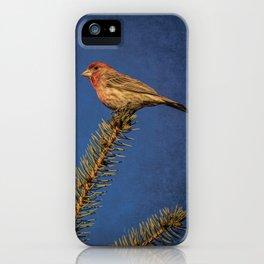 House Finch On A Douglas Fir iPhone Case