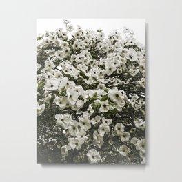 Demure Dogwood Metal Print