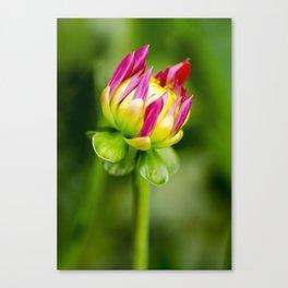 Karma Thalia Dahlia In Bloom Canvas Print