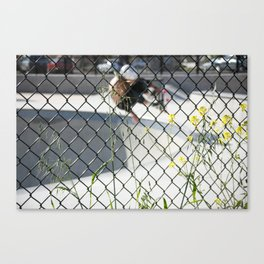 Ty Olsen. Frontside Indy Canvas Print