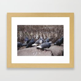 An Avian Meeting Framed Art Print
