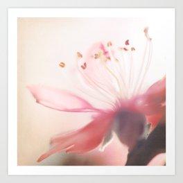 Vintage cherry blossom 2 Art Print