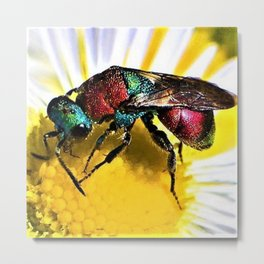 Multi-colored Cuckoo Wasp Portrait #1 Metal Print