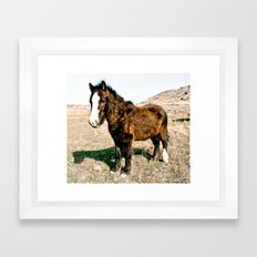 Mini Horse Framed Art Print