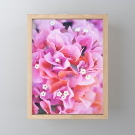 Bougainvillea Framed Mini Art Print