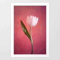 delicate Art Print