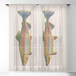 Golden Trout Sheer Curtain