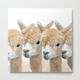 Alpaca Line Up Metal Print