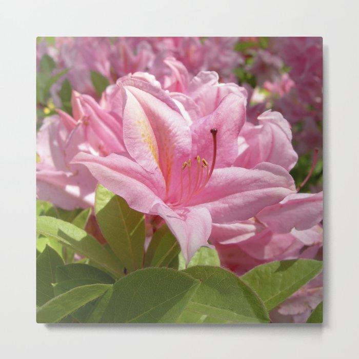 rhododendron bloom XXI Metal Print