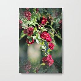 Tea Rose Reflections Metal Print