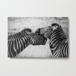 Zebras - Pair - Equines - Stripes - Striped - Heads. Beautiful nature. Great outdoor. Go explore Metal Print