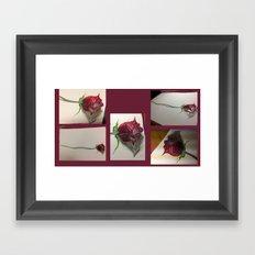 rosita Framed Art Print