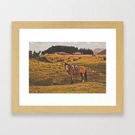 Horse among the sacred fields (Cusco, Peru) Framed Art Print