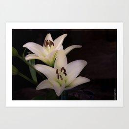 Lilies in the Dark Art Print