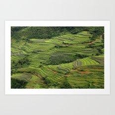 Yunnan Terraces Art Print