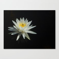 White Water Lily Visitor Canvas Print