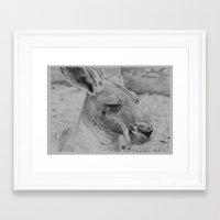 kangaroo Framed Art Prints featuring Kangaroo by Beau skarp