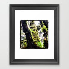 Tree Climbing  Framed Art Print