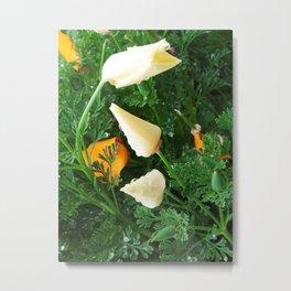 White California Poppies 2014-03-29 16.57.53. Metal Print