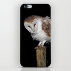Barn Owl iPhone Skin
