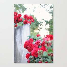 On the Fence Canvas Print