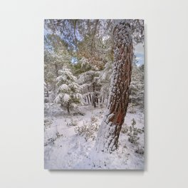 Snowing....Dream Forest. Tangled, Sierra Nevada Metal Print